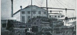 Hace 50 años: Del cierre de ingenios a liderar con el limón